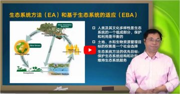 """Video: """"Nature-based solutions: a new ecological term"""""""